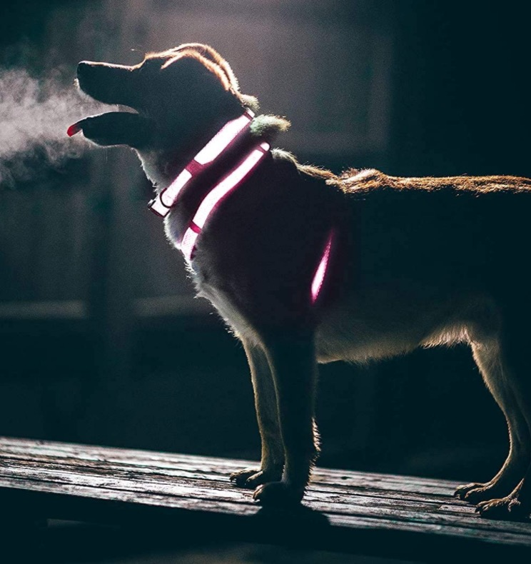 dog at night with reflective collar