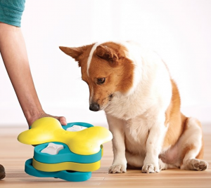puppy with Nina Ottosson puzzle toy