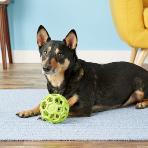 pup with JW Pet Hol-ee Roller ball puzzle toy