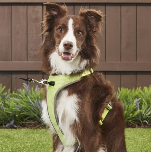 Chai's Choice Outdoor Adventure Dual Clip Reflective Harness
