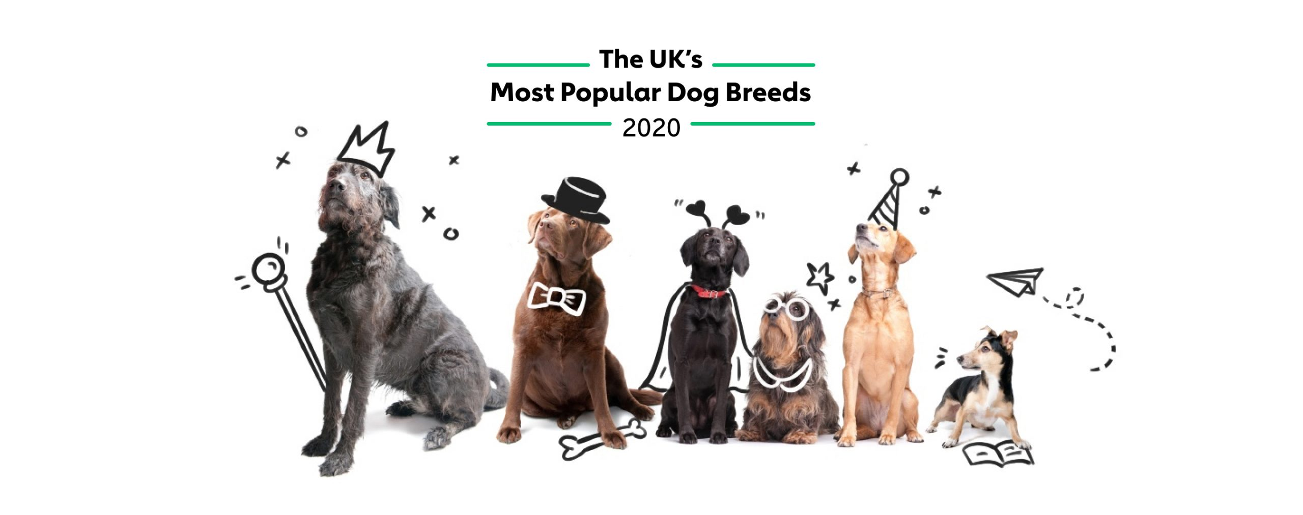 Most Popular Dog Breeds in The UK