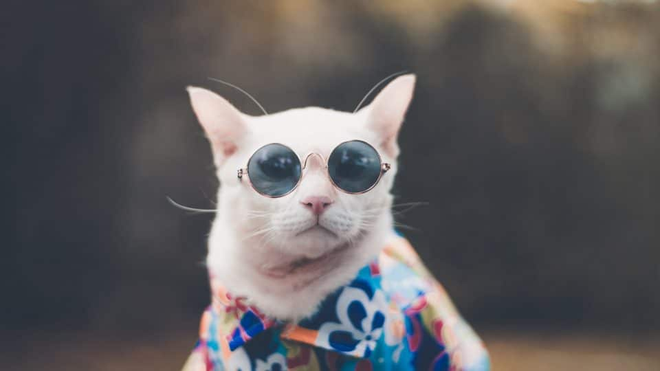 white hipster cat in sunglasses and hawaiian shirt