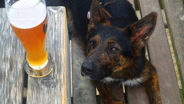 Beer for Dogs cover image