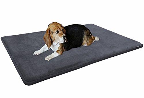 cane sul letto di raffreddamento grigio