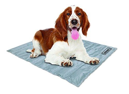 cane sul letto di raffreddamento Coleman
