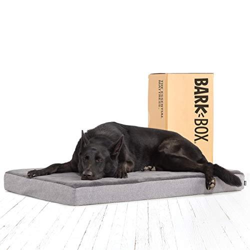 black dog lying on cheap Barkbox memory foam dog bed