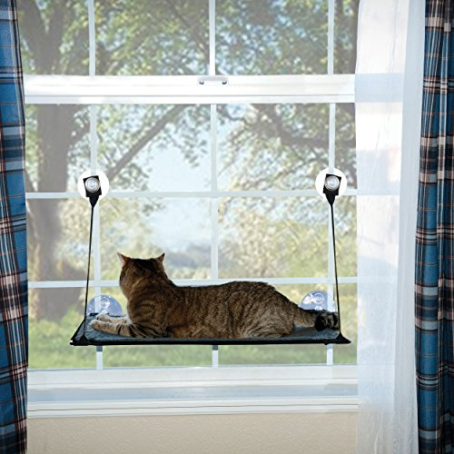 kitty on K & H cat bed for windows