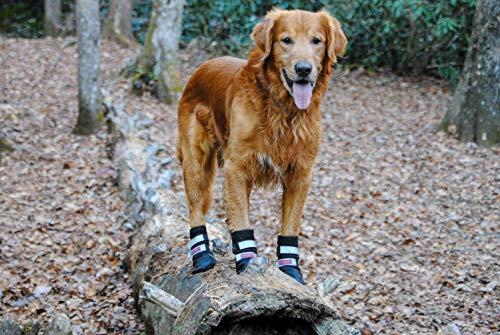 dog on a log wearing Bark Brite neoprene