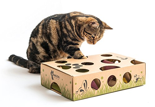 kitty playing with cardboard box cat puzzle toy with holes