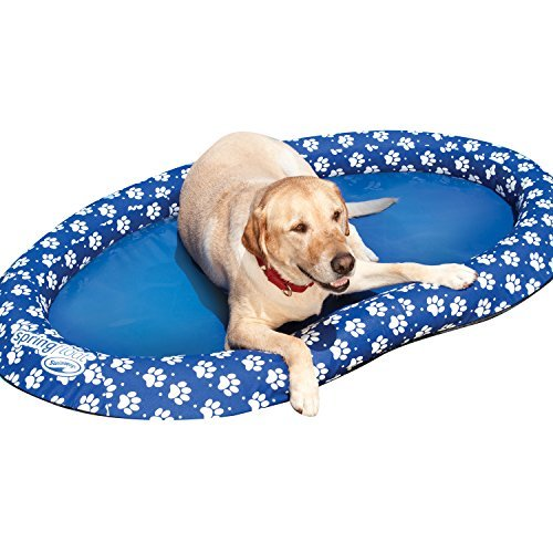 dog on SwimWays pool float