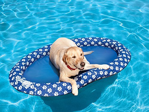 Amazon SwimWays pool float pool toy for dogs