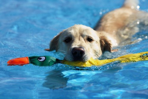Amazon Doggles get wet duck pool toy for dogs