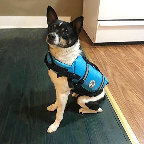 dog in blue Vivaglory life vest