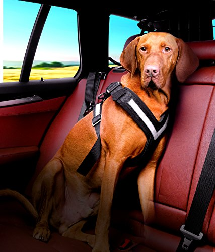 dog wearing 4x4 North America Allsafe harness in car