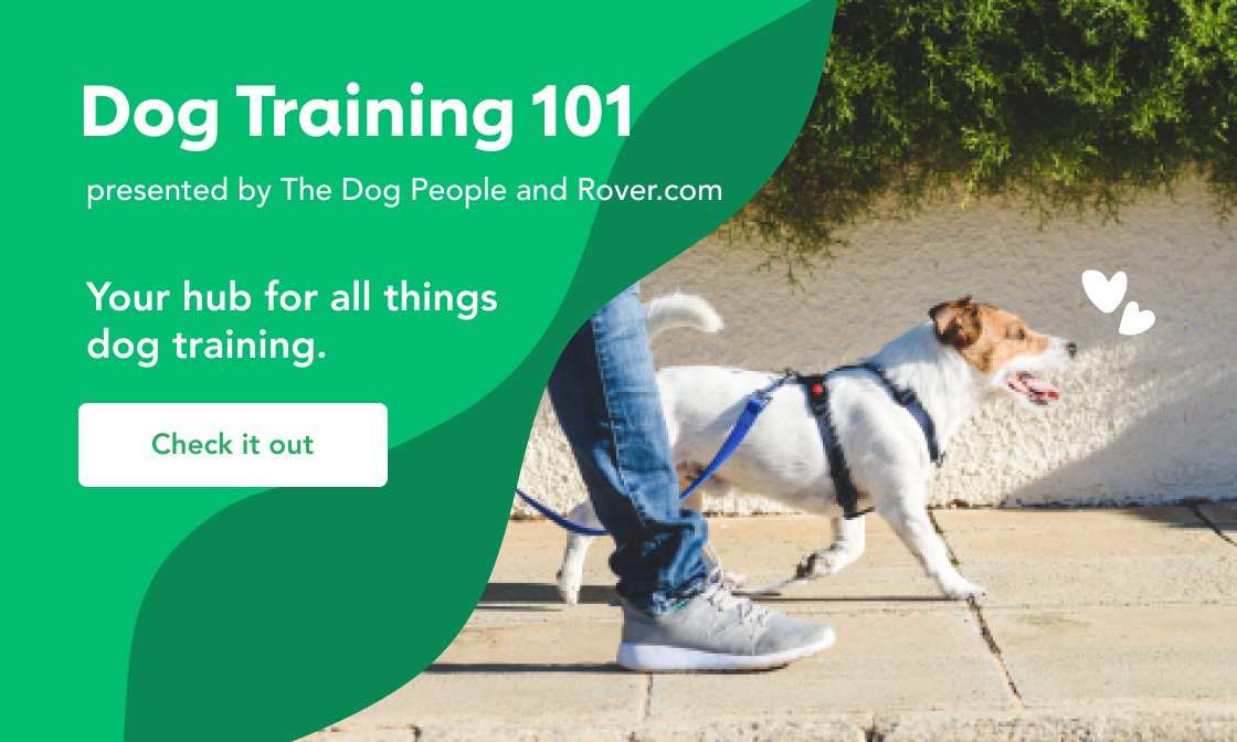Dog Training 101 Guide