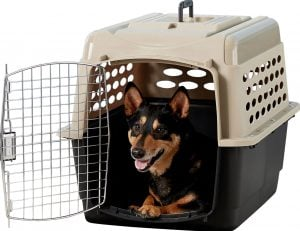 dog sitting inside Petmate Vari Kennel
