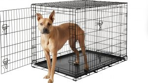 dog inside Frisco foldable dog crate for training
