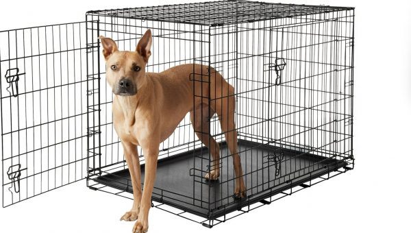 dog in metal crate