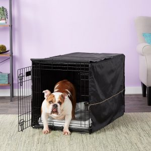 bulldog inside Midwest iCrate double door crate with cover