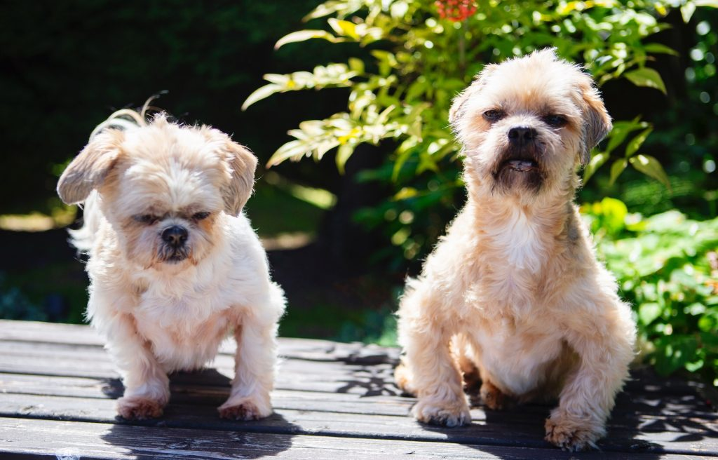 matthew inman's dogs beatrix and rambo