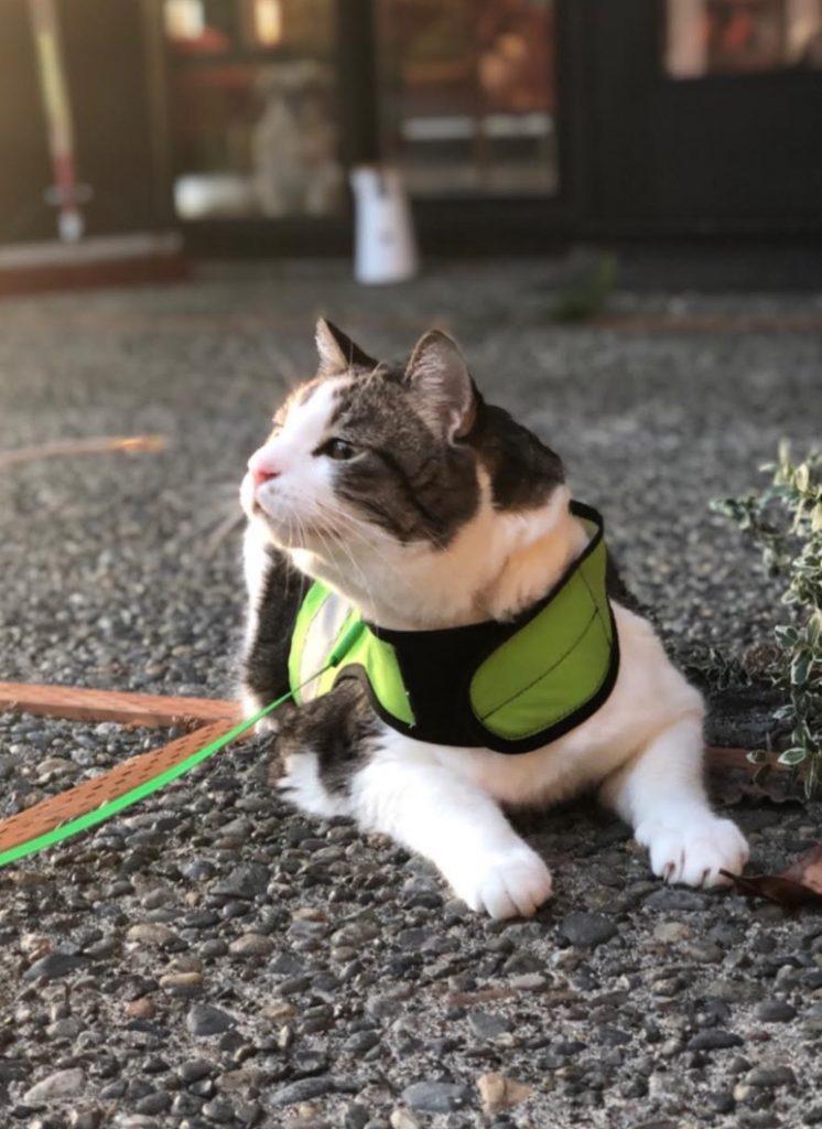 Matthew Inman's Cat Bullitt