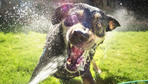 dog playing with water from hose