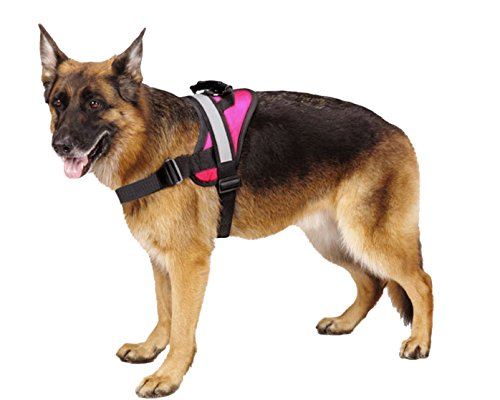 German Shepherd wearing Expawlorer harness