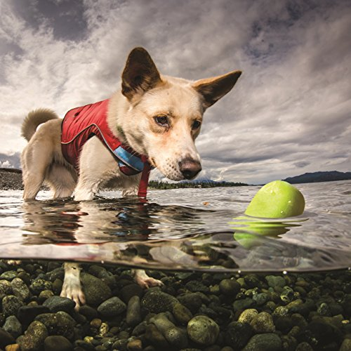 dog in water with Kurgo skipping stone floating toy