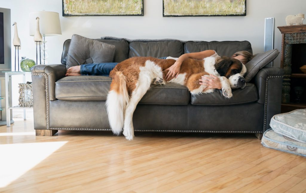 woman with st. bernard snuggling on couch