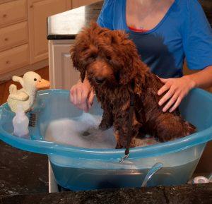 Chewy Pet Gear bathing tub dog bathtubs