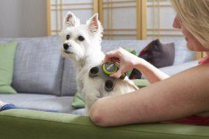 PetWell therapeutic dog massage tool