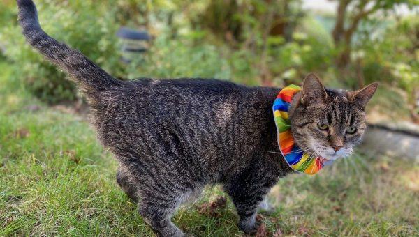 cat wearing colorful Birdsbesafe collar