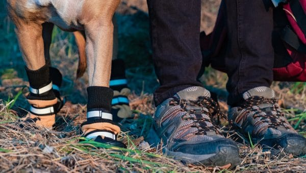 dog and human wearing hiking boots