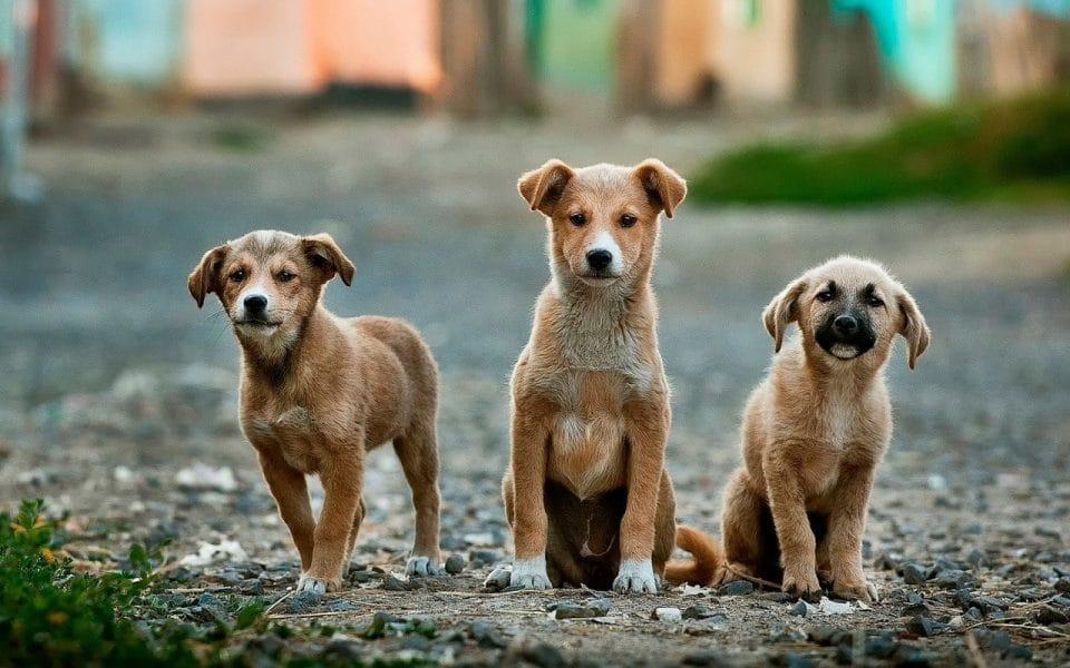 three puppies sitting