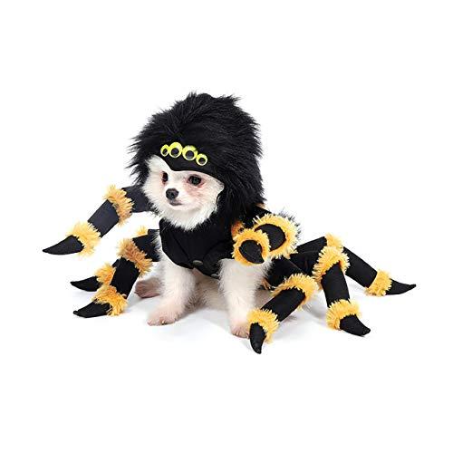 dog in Mogoko yellow and black spider costume