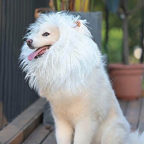 white lion mane on dog