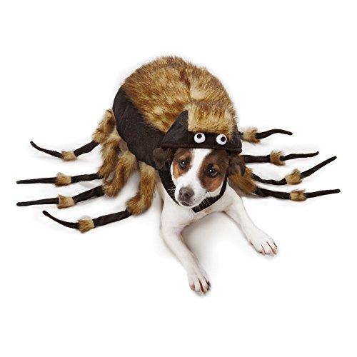 dog in Zack & Zoey arachnid costume