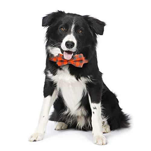 Collie in Vaburs dog bow tie