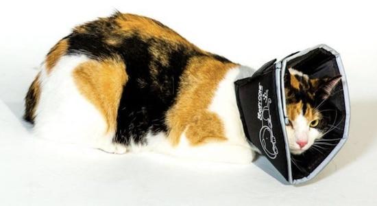 Comfy Cone Elizabethan collar on cat