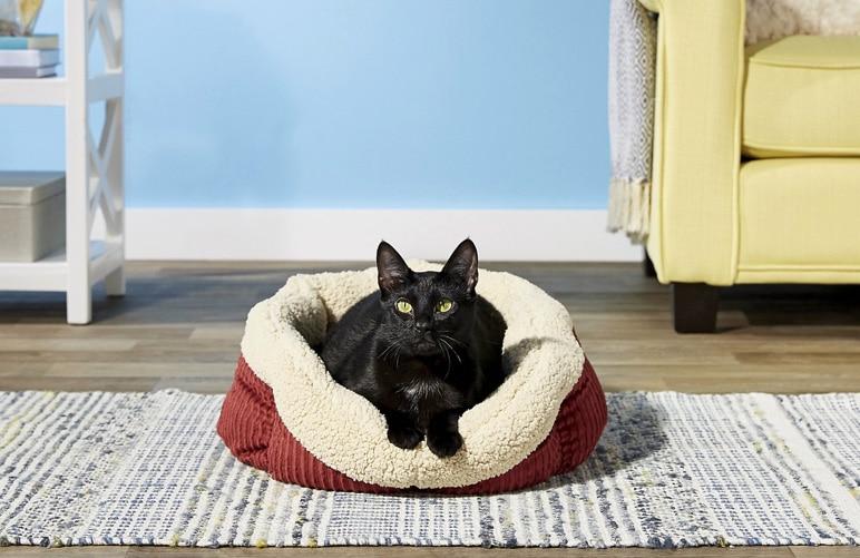 black cat in fleece bed