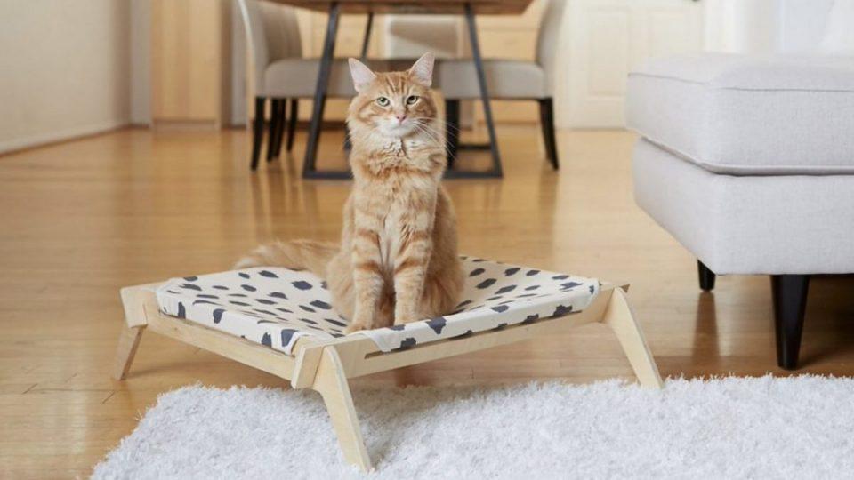 cat sitting on hammock