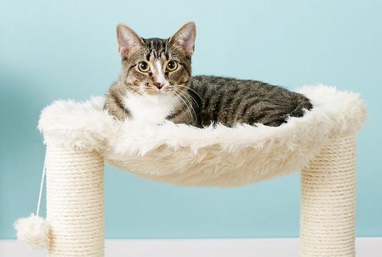 Trixie hammock