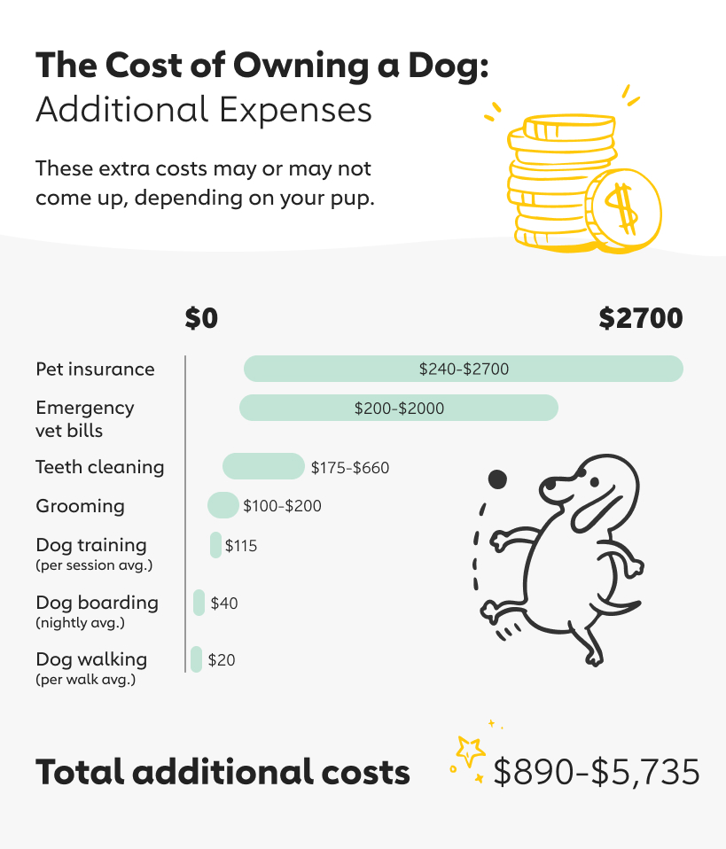 Additional potential expenses of owning a dog