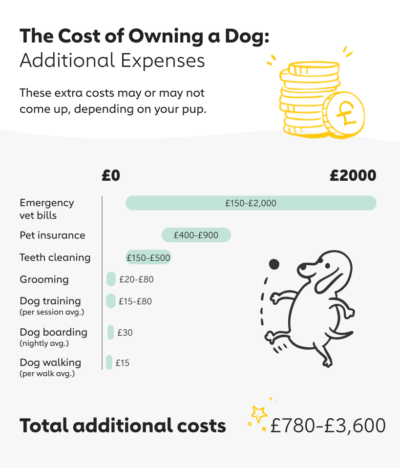 Additional Expenses Owning a Dog
