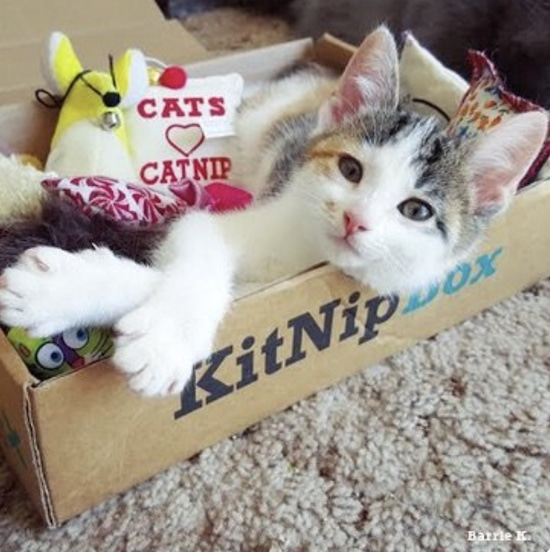 cat in a KitNipBox with toys