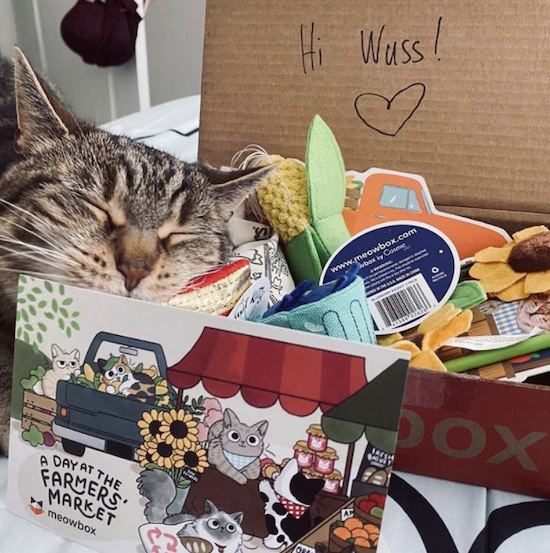 cat sleeping on Meowbox filled with items