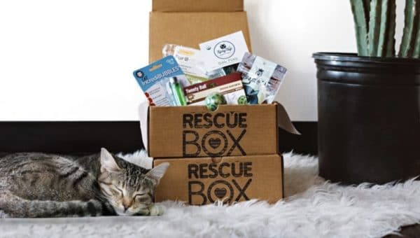 cat with subscription box