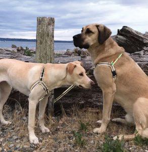 Dolan's Dog Doodads Wonder Walker™ Flash Reflective Dog Harness