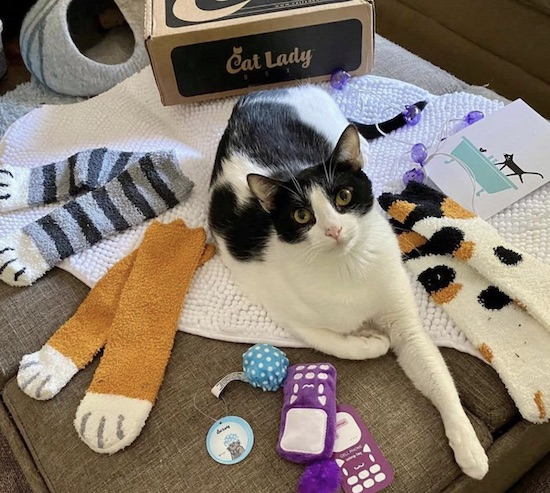 cat with items from Cat Lady subscription box