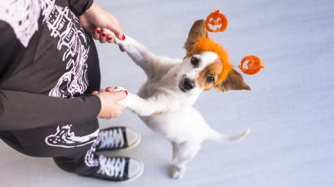 person dressed as skeleton holding paws of dog with pumpkin headband